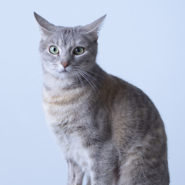"""Tilly the Cat"" stock image"