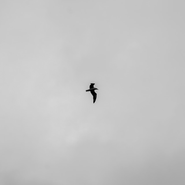 """A bird in black"" stock image"