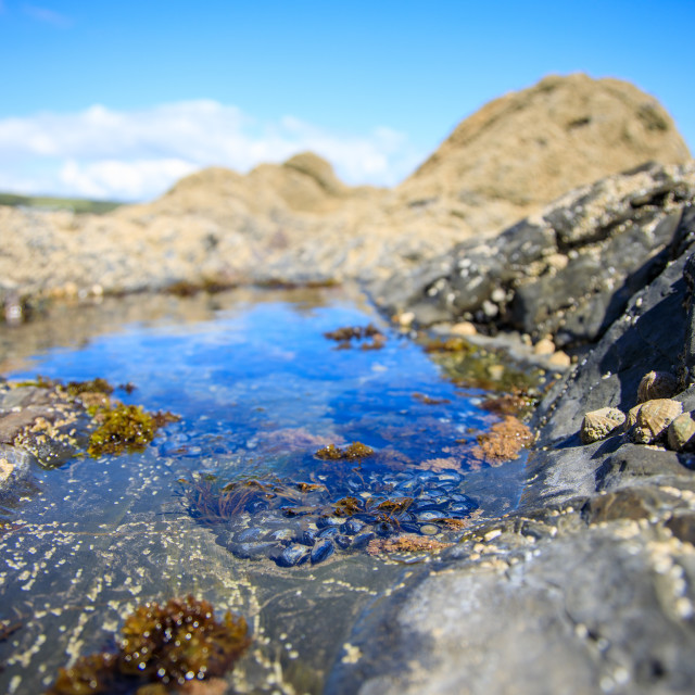"""Amroth Rock Pool"" stock image"