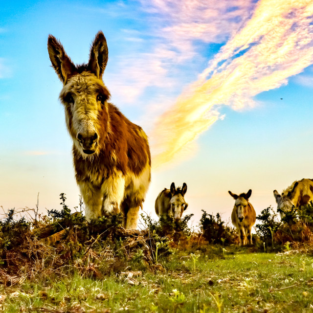 """Forest Donkeys"" stock image"