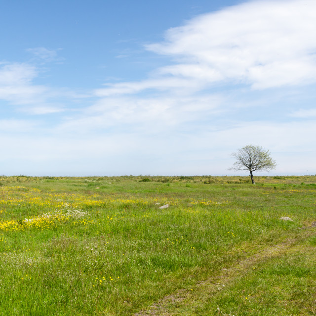 """Bright green and yellow grassland with a lone tree"" stock image"