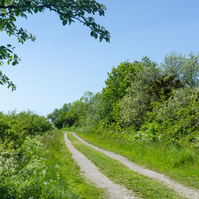 """Winding dirt road through a colorful green meadow by spring seas"" stock image"