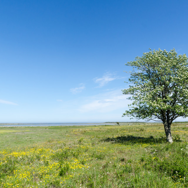 """Lone tree in a beautiful green and bright coastland by springtim"" stock image"