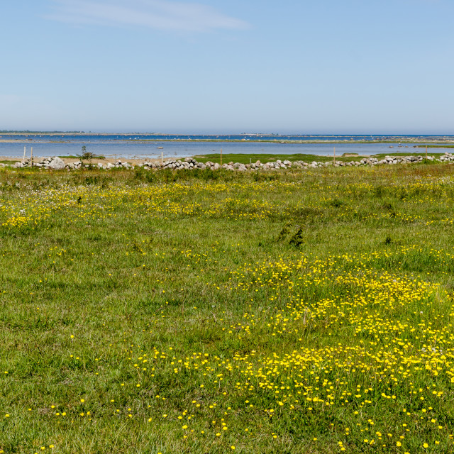 """Beautiful wide open grassland with yellow flowers by the coast o"" stock image"