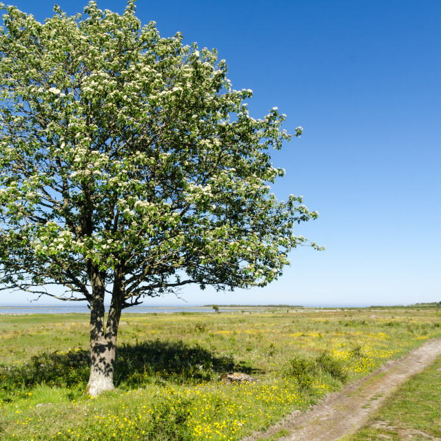 """Alone tree by a dirt road in a beautiful landscape with green gr"" stock image"