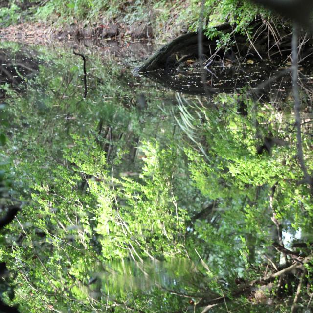 """Water Reflection, Stroud NSW, Australia"" stock image"