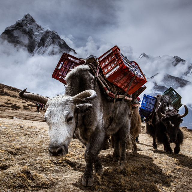 """Big Rigs of the Himalayas"" stock image"