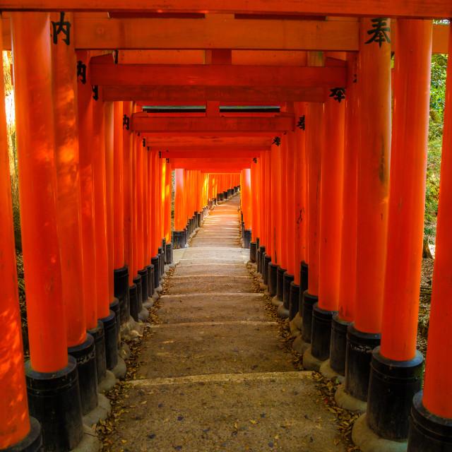 """red Torii gates of famous Fushimi Inari taisha. Fushimi Inari is most..."" stock image"