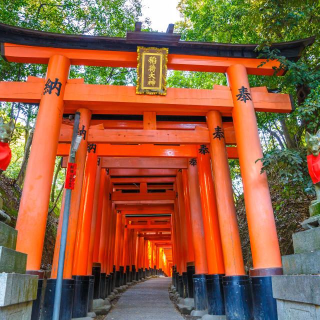 """""""Kyoto, JapanThousands vermilion torii gates of Fushimi Inari taisha, south of..."""" stock image"""