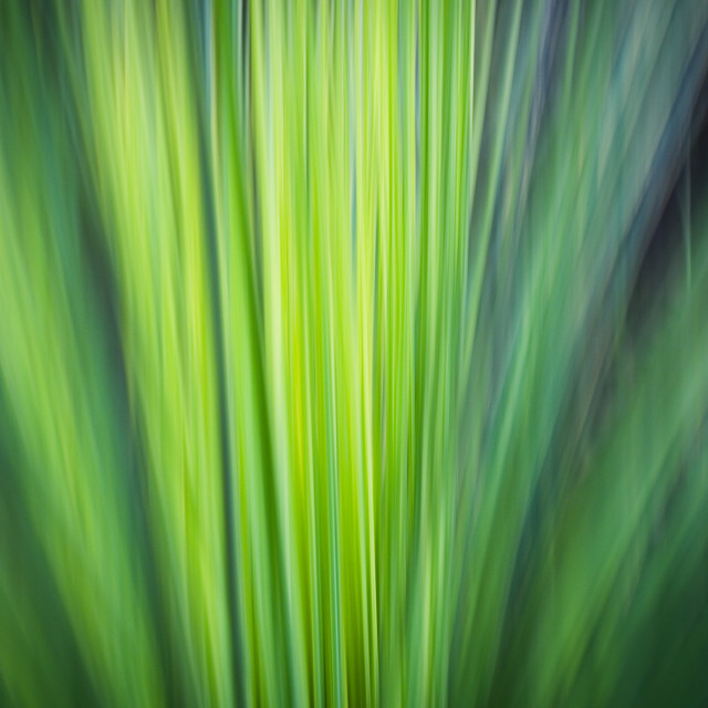 """Grass Tree Abstract"" stock image"