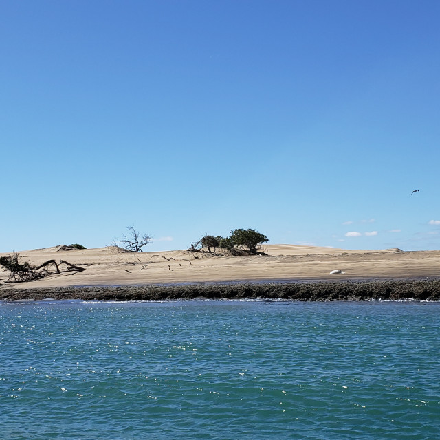 """Sandy dunes and deadwood, Baja California, Mexico"" stock image"