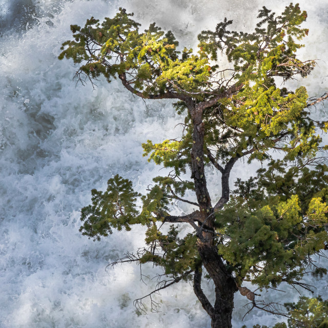 """Waterfalls vs Pine Tree"" stock image"