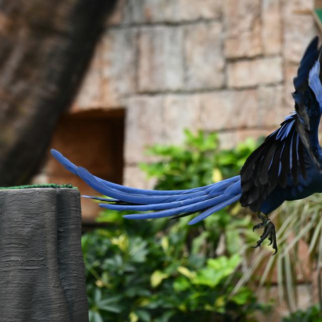 """Blue parrot"" stock image"