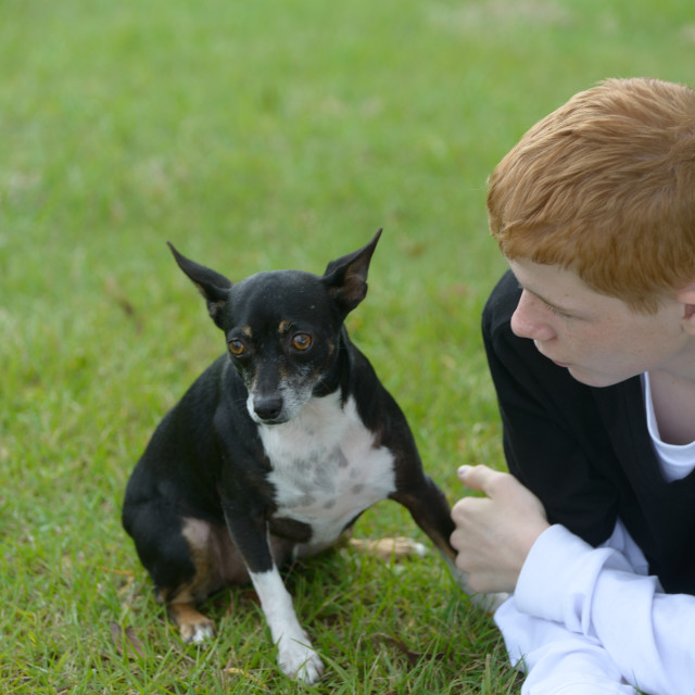 """Dog and Boy"" stock image"