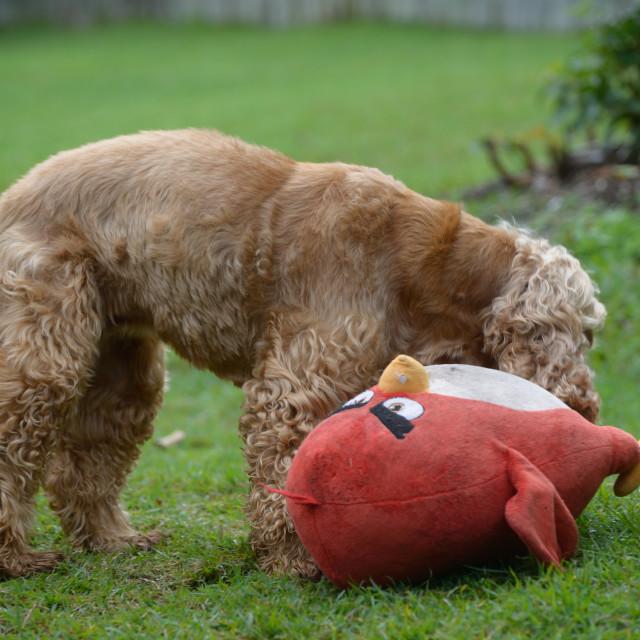 """Dog Playing"" stock image"
