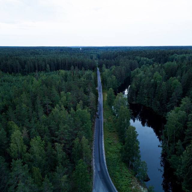 """""""Road trough forest"""" stock image"""