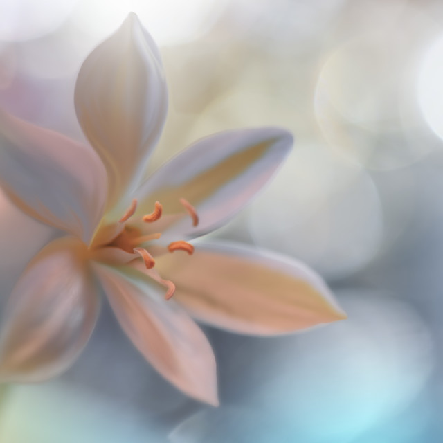"""Macro Photography.Floral abstract pastel background with copy space.Tranquil nature closeup view"" stock image"