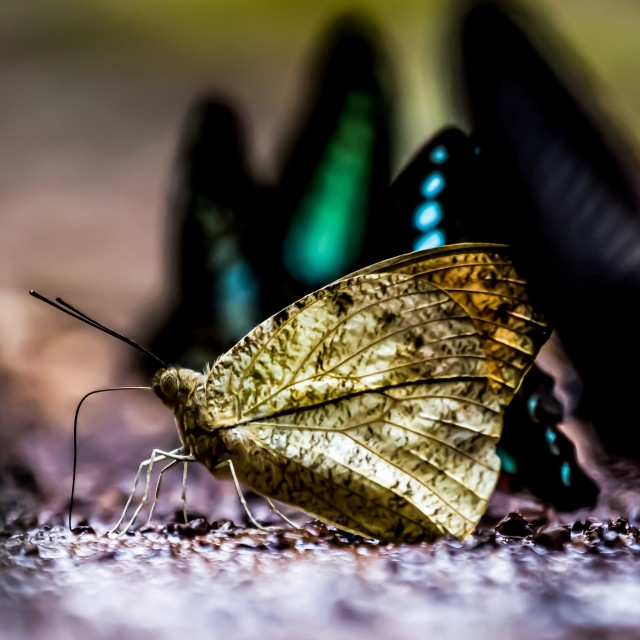 """Butterfly Leaf"" stock image"