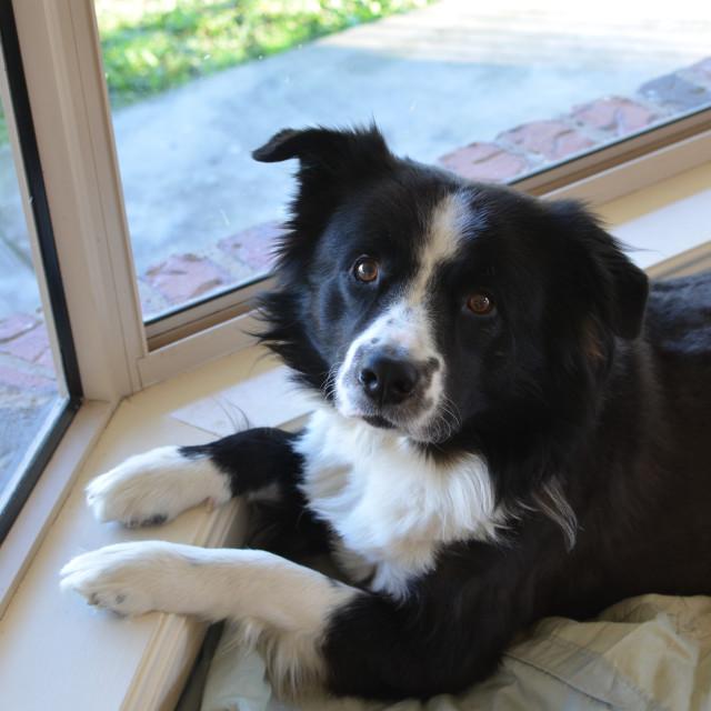 """Cute Dog"" stock image"
