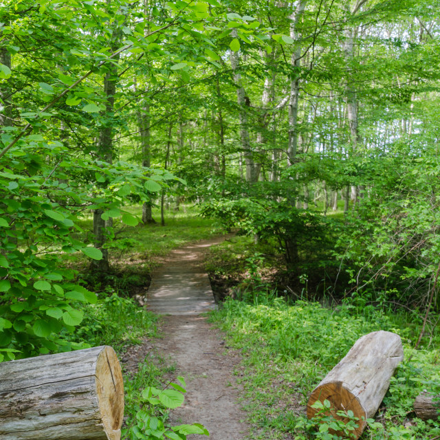 """Footpath in a lush greenery in a deciduous forest in summer seas"" stock image"