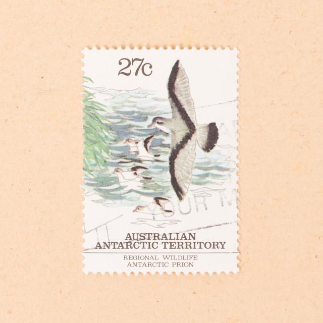 """AUSTRALIA - CIRCA 1980: A stamp printed in Australia shows a bird, circa 1980"" stock image"