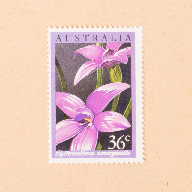 """AUSTRALIA - CIRCA 1980: A stamp printed in Australia shows a flower..."" stock image"