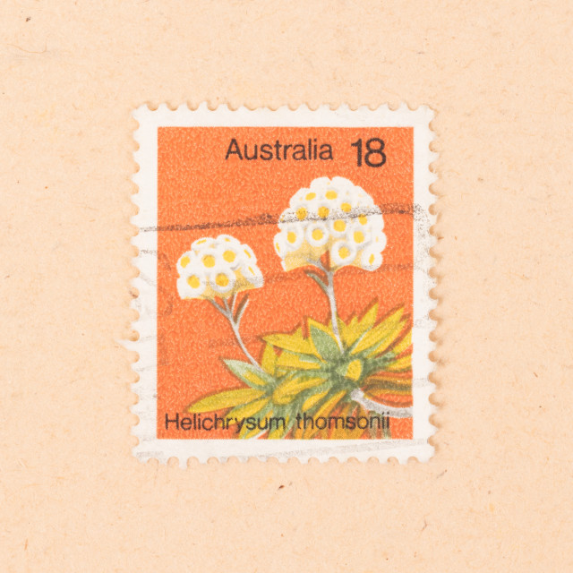 """AUSTRALIA - CIRCA 1970: A stamp printed in Australia shows a flower..."" stock image"