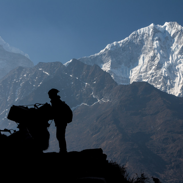 """""""A Sherpa man fixing the load on a yak with Thamserku peak as a backdrop"""" stock image"""