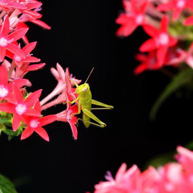 """""""Little Hopper In The Garden"""" stock image"""