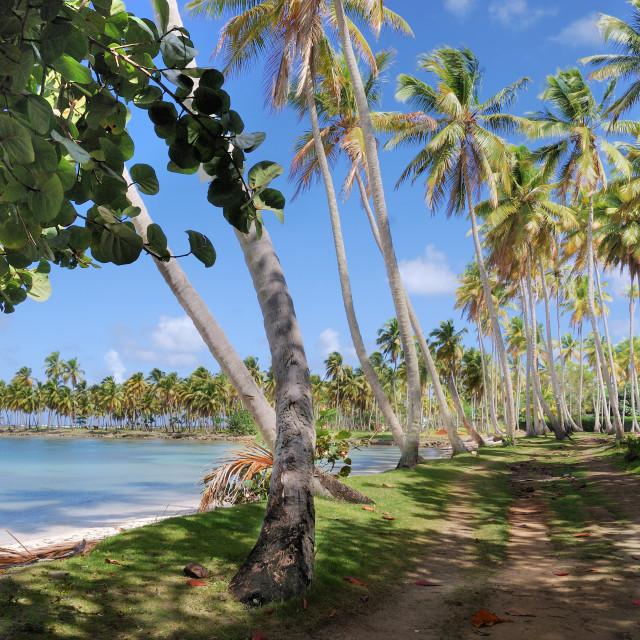 """Samana, Dominican Republic"" stock image"