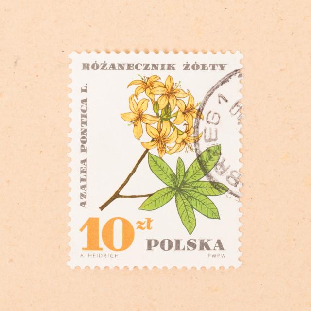 """""""POLAND - CIRCA 1970: A stamp printed in Poland shows a flower, circa 1970"""" stock image"""