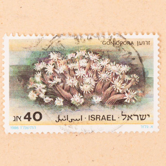 """""""ISRAEL - CIRCA 1980: A stamp printed in Israel shows a plant, circa 1980"""" stock image"""