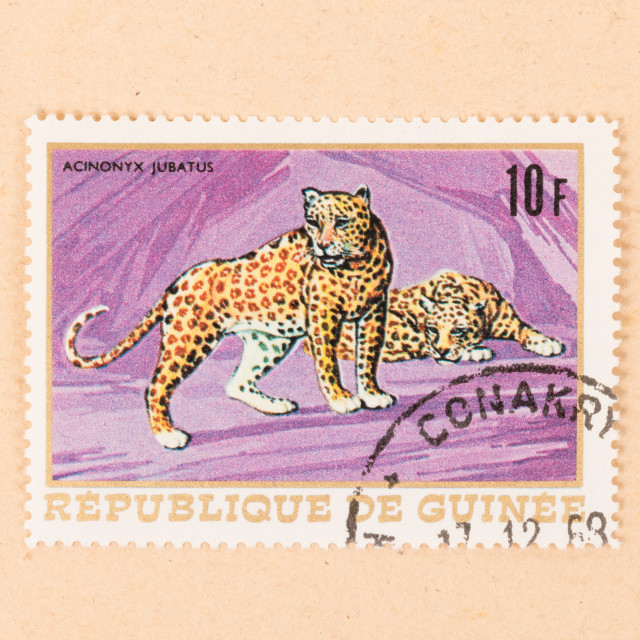 """""""PAPUA NEW GUINEA - CIRCA 1980: A stamp printed in Papua New Guinea shows a..."""" stock image"""