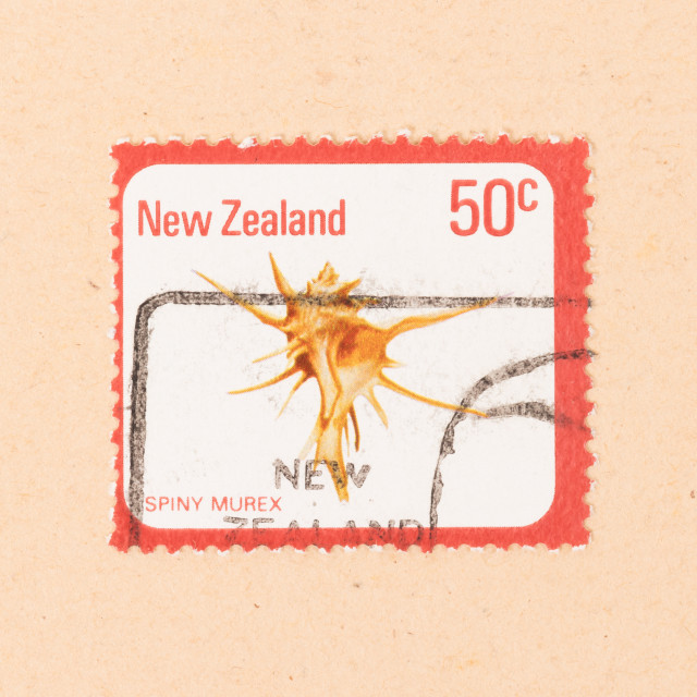 """""""NEW ZEALAND - CIRCA 1980: A stamp printed in New Zealand shows a Spiny Murex,..."""" stock image"""