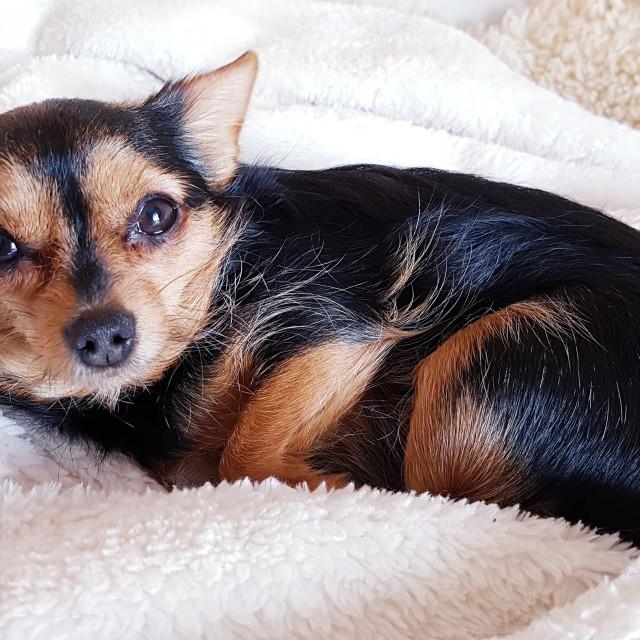 """""""dog on sofa"""" stock image"""