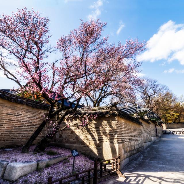 """""""Cheandokgeung Palace - Detail"""" stock image"""