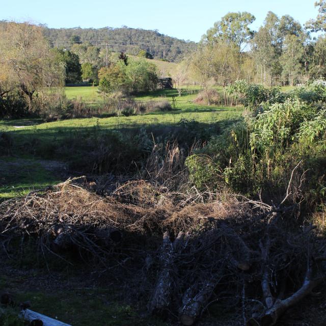 """Australian Landscape"" stock image"