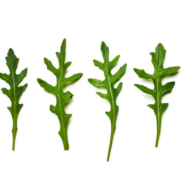 """""""Four arugula leaves isolated on white"""" stock image"""