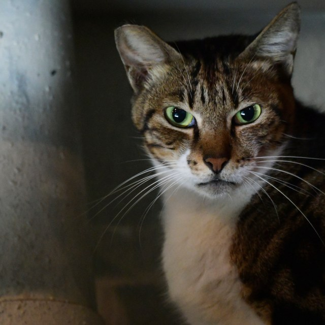 """Wild cat at night"" stock image"