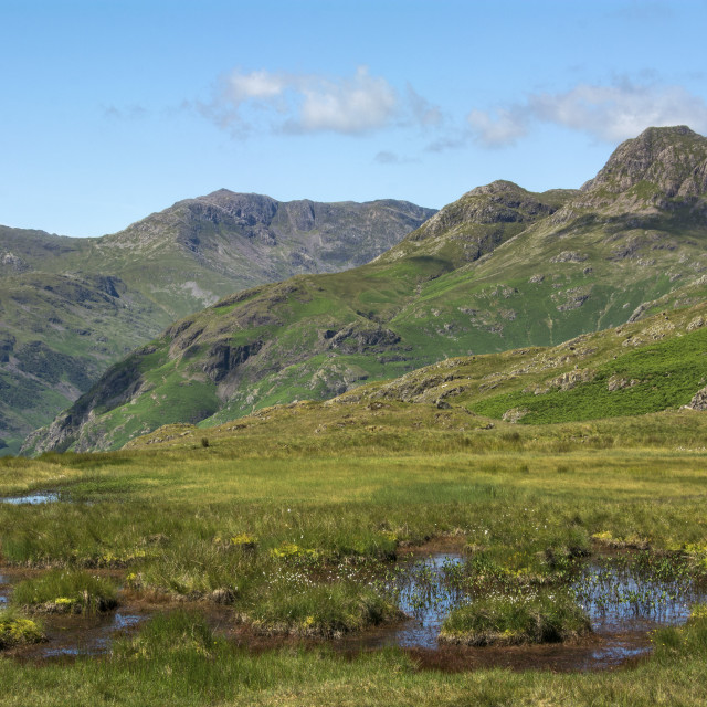 """Summer in Langdale"" stock image"