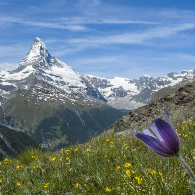 """The Matterhorn"" stock image"