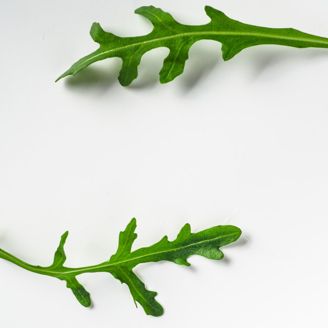 """""""Two arugula or rucola leaves with copy space"""" stock image"""