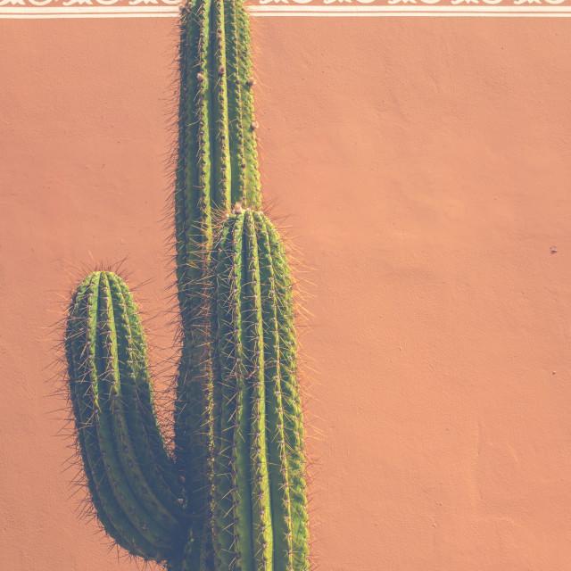 """Southwestern USA Cactus Detail"" stock image"