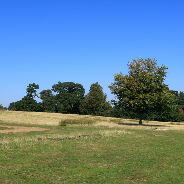 """Trees and fields in Sevenoaks"" stock image"