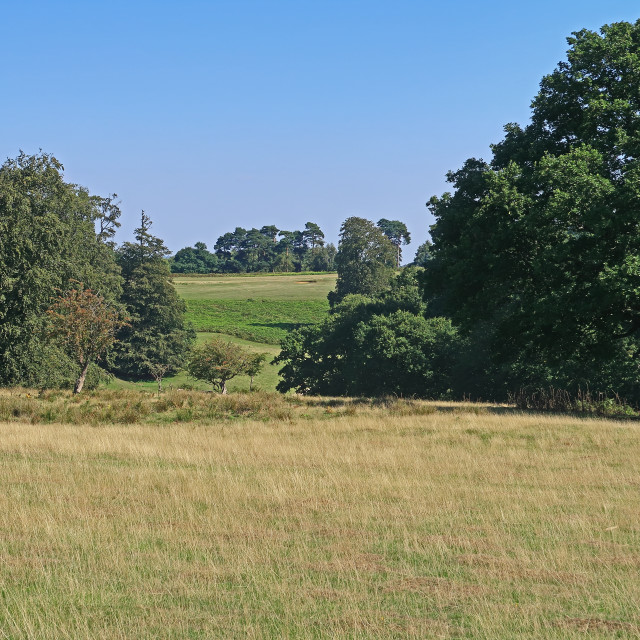 """Fields and meadows near Sevenoaks"" stock image"