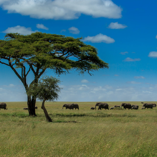 """A classic out of Africa scenery"" stock image"