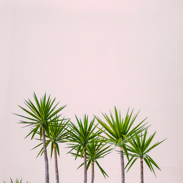 """Hawaii Hotel Tropical Plants"" stock image"