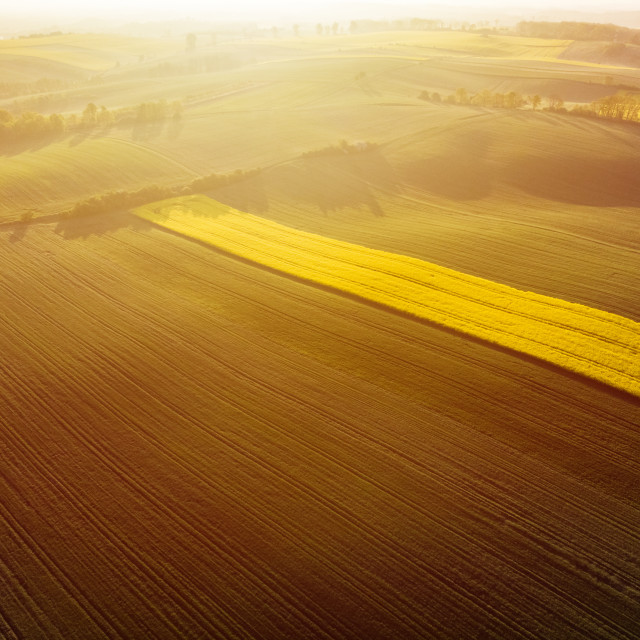 """Aerial view of sunrise ofer yellow colza and green grain field"" stock image"