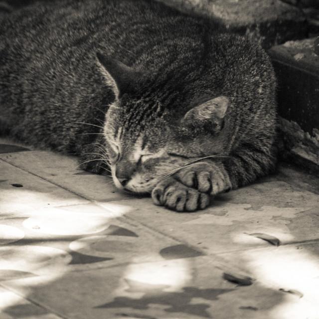 """Sleepy afternoon"" stock image"