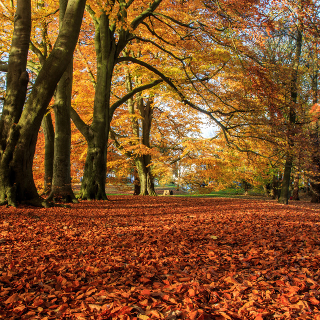 """An Autumn scenery"" stock image"
